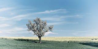 Weinlese-Panorama mit Feld und blühendem Baum Stockbilder