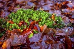 Weinlese pflanzt Hintergrund Lizenzfreie Stockfotos