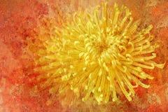 Weinlese redete Blume an Stockbilder