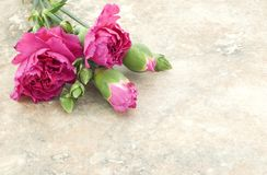 Weinlese-rosafarbene Gartennelken Lizenzfreie Stockbilder