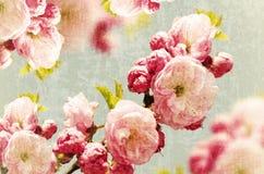 Weinlese Rose Background Stockfotografie