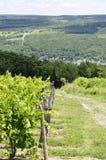 Weinlese-Traube Vinyards und Tal Stockfoto