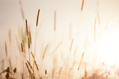 Weinlese-Wiesenblumennatur am frühen sonnigen Morgen stockfotos