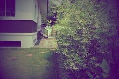 Weinleseart grünen mok Baums nahe Haus auf im Freien Stockbild