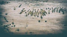 Weinleseartzusammenfassungs-Holzbeschaffenheit stockfotografie