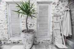 Weinleseaußenwand mit großer Vasen- und Kokosnusspalmenanlage Stockbild