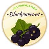Weinleseaufkleber mit der schwarzen Johannisbeere lokalisiert auf weißem Hintergrund in der Karikaturart Auch im corel abgehobene Stockfotos