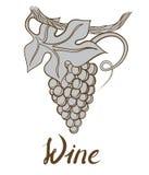 Weinlesebündeltrauben für Wein Stockfotos