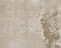 Weinlesebeschaffenheit mit Traubenskizze Stockfotografie
