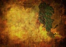 Weinlesebild der Traube Stockbild