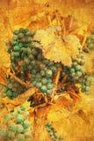 Weinlesebild der Traube Stockfoto