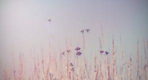 Weinlesebild von den bunten Drachen, die in blauen Himmel hinter gras fliegen Stockbilder