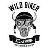 Weinlesebilder des Büffels, Bison, Ochse für T-Shirt Design für Motorrad, Fahrrad, Motorrad, Rollerclub, aero Club lizenzfreie abbildung