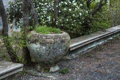 Weinleseblumenbeet in einem verlassenen Park Stockfotografie