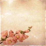 Weinleseblumenhintergrund mit rosa Blumen auf einem braunen backgroun Stockfotos