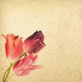 Weinleseblumenhintergrund mit Tulpen auf dem Hintergrund alten g Stockfotografie