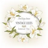 Weinleseblumenkarte mit einem Rahmen von weißen Lilien Lizenzfreie Stockfotografie