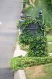 Weinlesebriefkasten bedeckt mit grünem Efeu Stockbild