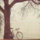 Weinlesefahrrad nahe Baum im Nebel Stockfotos