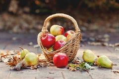 Weinlesefallkorb voll von Äpfeln und von Birnen auf Naturhintergrund Stockfoto