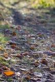 Weinlesefarbton mit Weichzeichnung des trockenen Blattes Stockbild