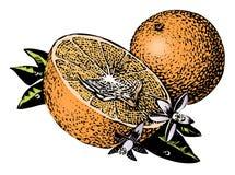 Weinlesefünfziger jahre Orangen Stockbild