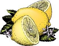 Weinlesefünfziger jahre Zitronen Stockfotografie