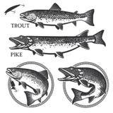Weinleseforellenfischen versinnbildlicht, Aufkleber und Design Stockfoto