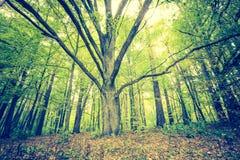 Weinlesefoto der herbstlichen Waldlandschaft Lizenzfreie Stockfotografie