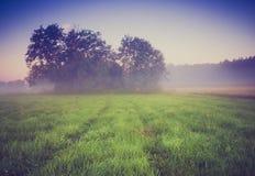 Weinlesefoto der nebeligen Wiese des Morgens im Sommer Landwirtschaftliche Landschaft Lizenzfreies Stockbild