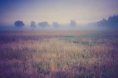Weinlesefoto der nebeligen Wiese des Morgens im Sommer Landwirtschaftliche Landschaft Stockbilder