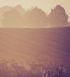 Weinlesefoto der nebeligen Wiese des Morgens im Sommer Landwirtschaftliche Landschaft Lizenzfreies Stockfoto