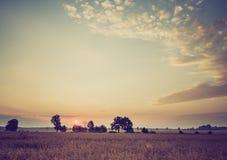 Weinlesefoto des frühen Morgens auf Roggenfeld Lizenzfreie Stockfotos