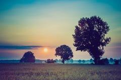 Weinlesefoto des frühen Morgens auf Roggenfeld Stockbilder