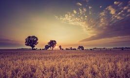 Weinlesefoto des frühen Morgens auf Roggenfeld Lizenzfreie Stockfotografie