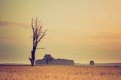 Weinlesefoto des frühen Morgens auf Roggenfeld Stockbild