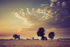 Weinlesefoto des frühen Morgens auf Roggenfeld Stockfotos
