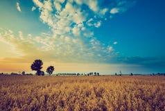 Weinlesefoto des frühen Morgens auf Roggenfeld Lizenzfreies Stockfoto