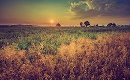 Weinlesefoto des frühen Morgens auf Roggenfeld Lizenzfreies Stockbild