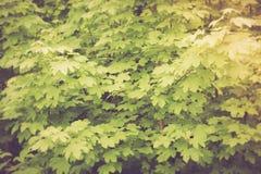 Weinlesefoto des Grüns verlässt Hintergrund Lizenzfreies Stockbild