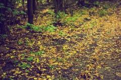 Weinlesefoto des herbstlichen Waldes Stockfotografie