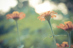 Weinlesefoto des Naturhintergrundes mit wilden Blumen und Anlagen Stockfotografie