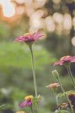 Weinlesefoto des Naturhintergrundes mit wilden Blumen und Anlagen Lizenzfreies Stockfoto