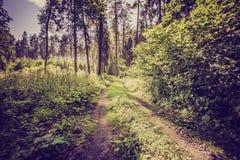 Weinlesefoto des Sommers oder des herbstlichen Waldes Lizenzfreies Stockbild