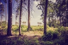 Weinlesefoto des Sommers oder des herbstlichen Waldes Lizenzfreie Stockfotografie