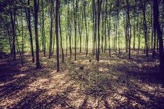 Weinlesefoto des Sommers oder des herbstlichen Waldes Stockfoto