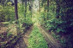 Weinlesefoto des Sommers oder des herbstlichen Waldes Lizenzfreies Stockfoto