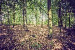 Weinlesefoto des Sommers oder des herbstlichen Waldes Stockfotos