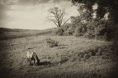 Weinlesefoto einer Landschaft mit Pferd am Sommer Lizenzfreies Stockbild