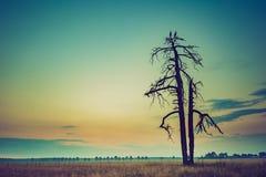 Weinlesefoto von den Störchen, die auf altem verwelktem Baum sitzen Lizenzfreie Stockfotografie